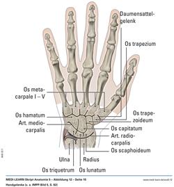 sehnen handgelenk anatomie