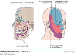 nervus trigeminus zahnarzt